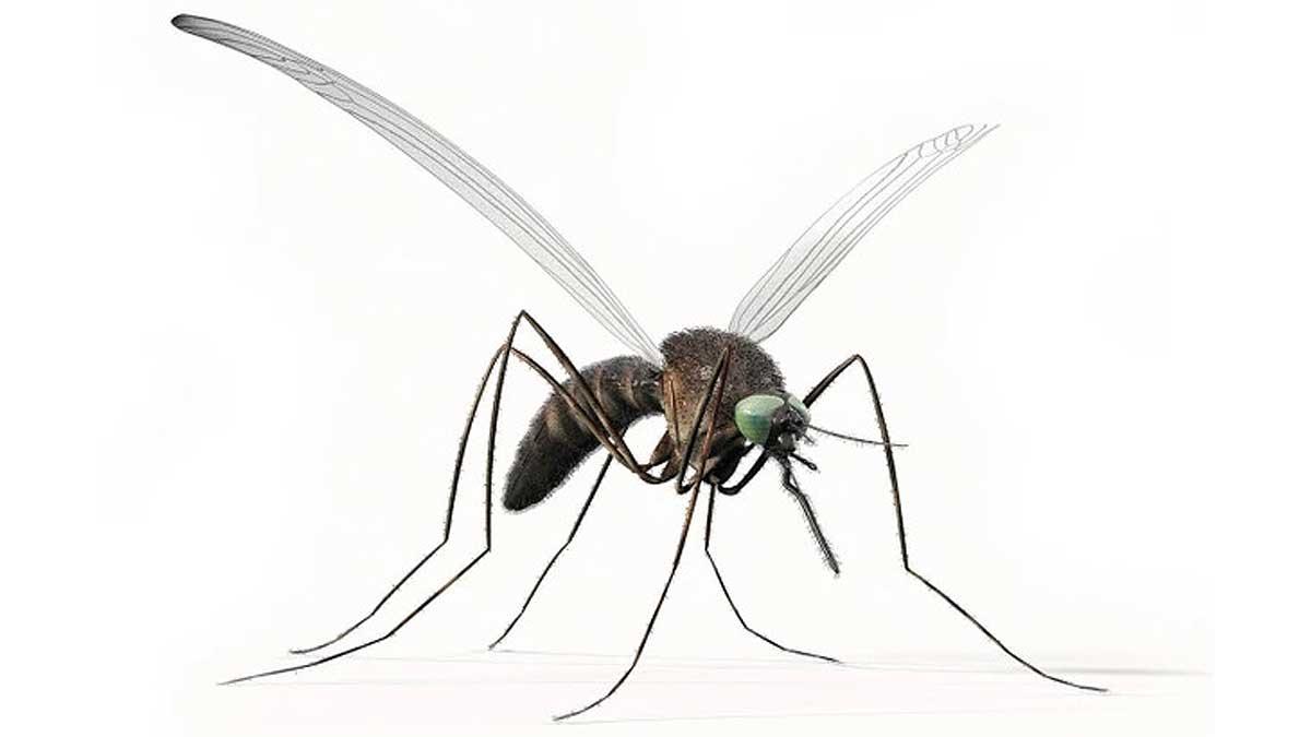 Mosquitoes Москиты