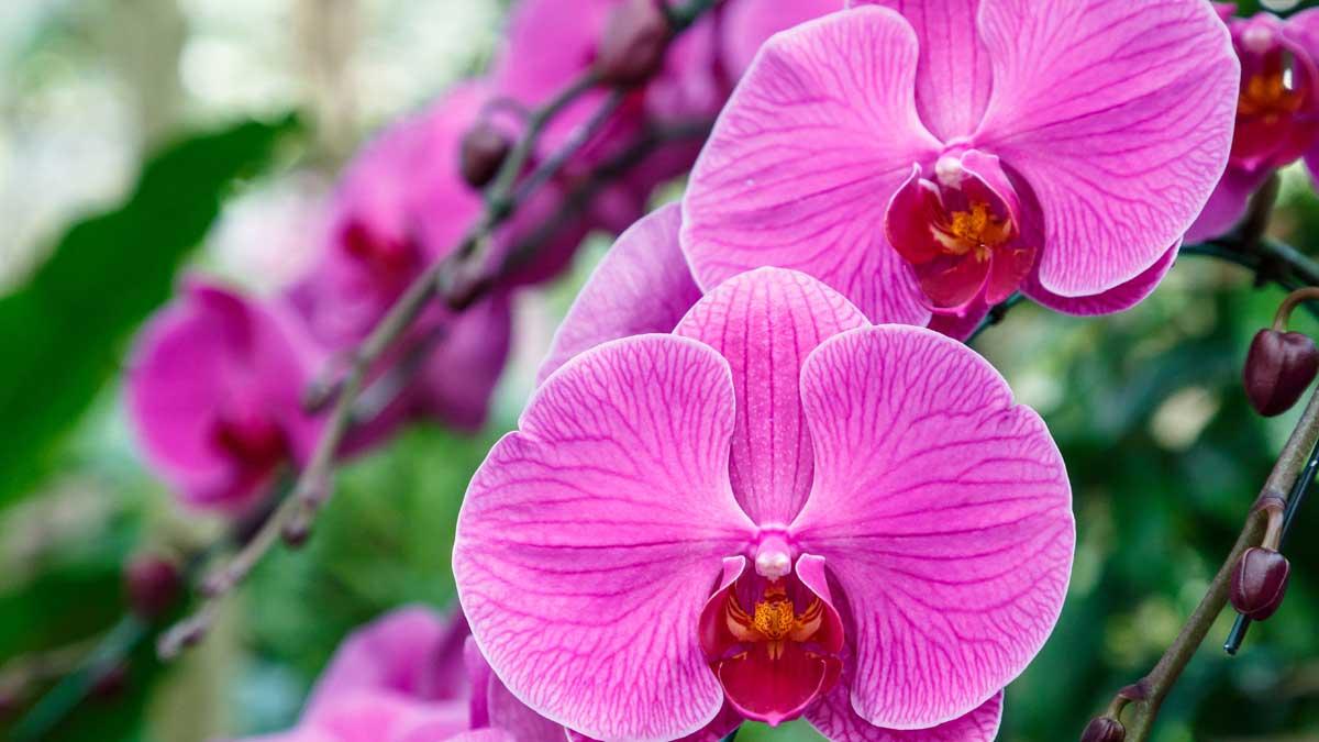 Орхидея цветок в саду