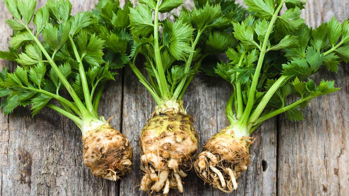 celery root корень сельдерей