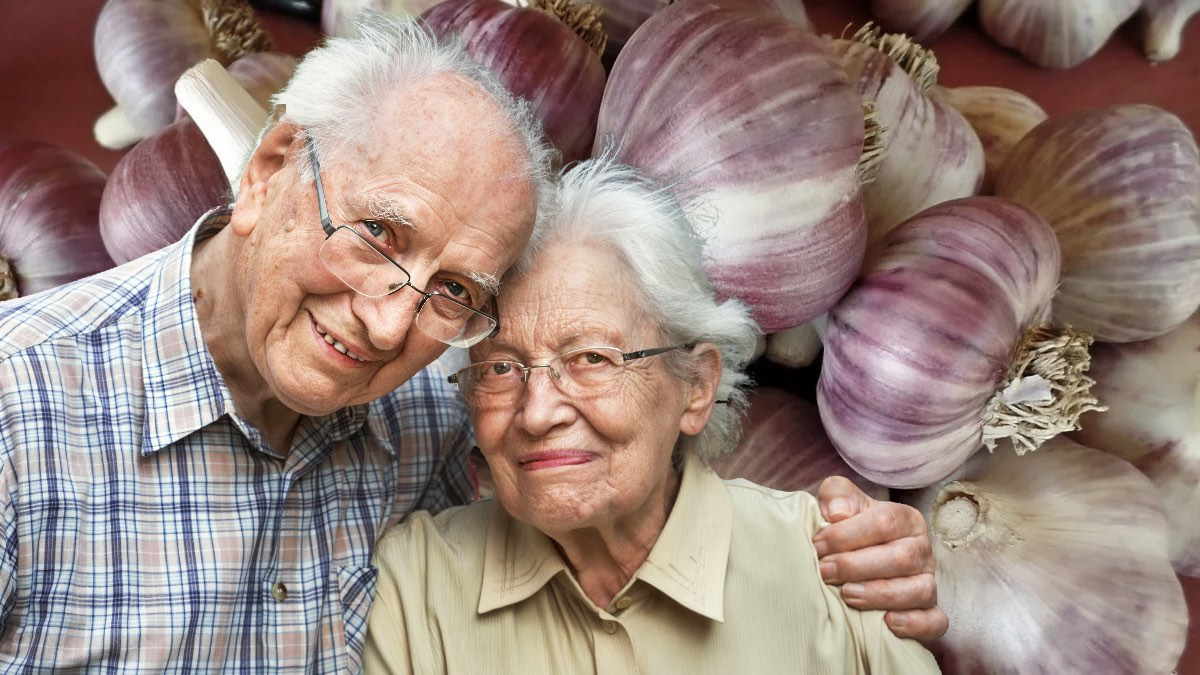чеснок пожилая пара и долголетие
