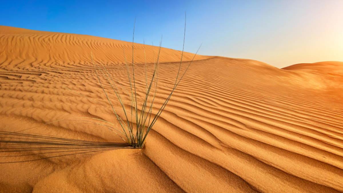 пустыня песок