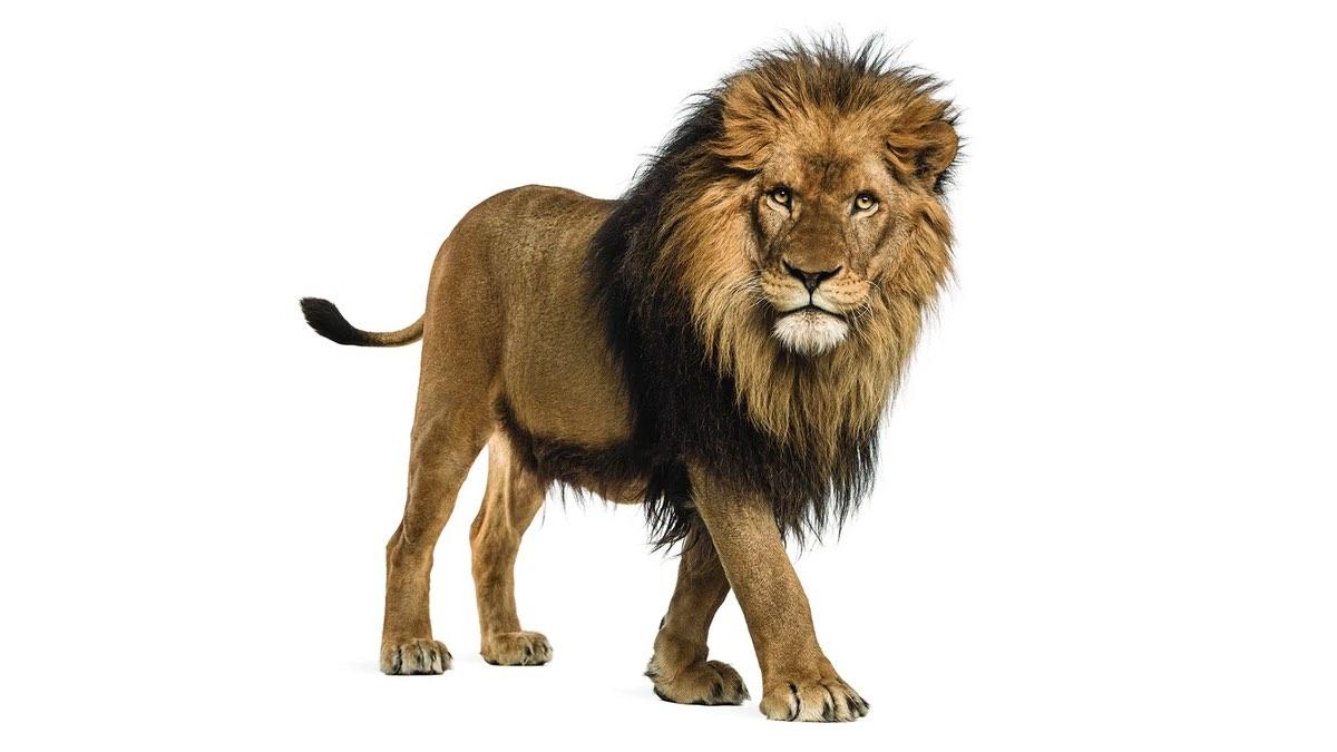 рейтинг убийц лев