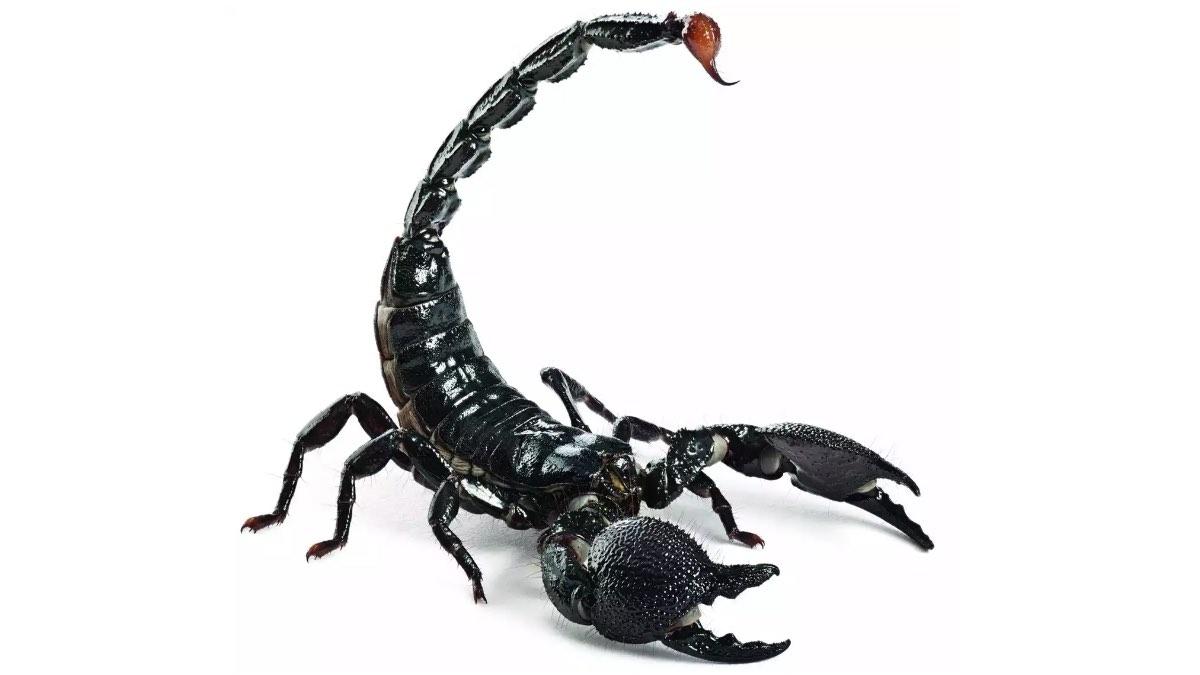 рейтинг убийц – скорпион