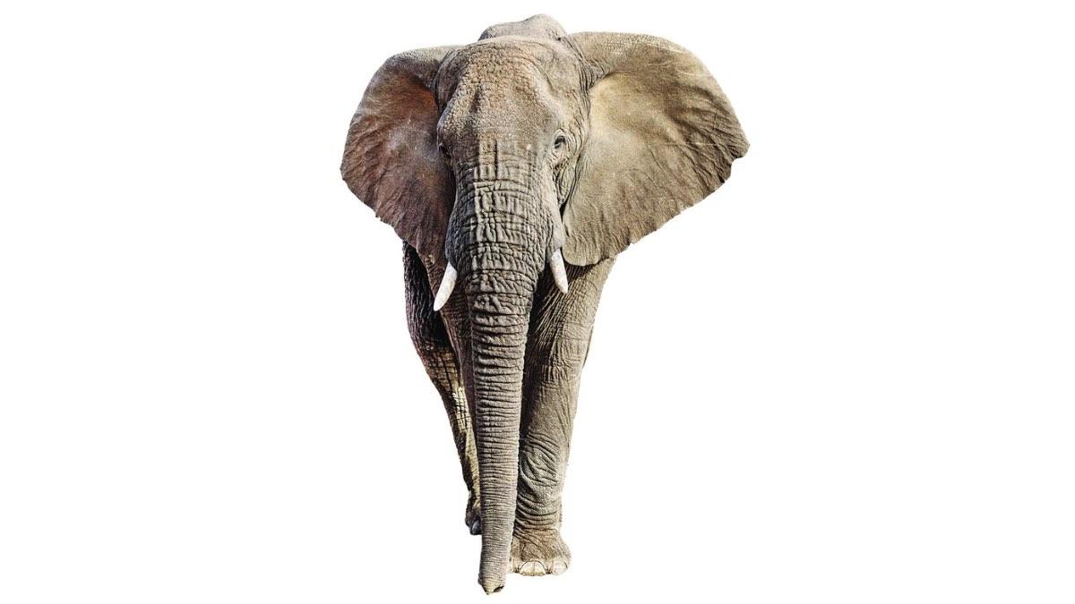 рейтинг убийц – слон