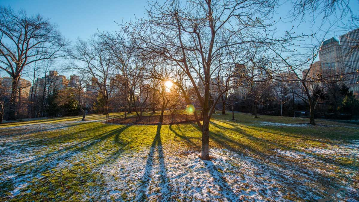весна парк Москва потепление
