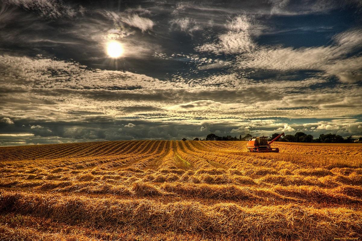 Инфляция и глобализация: почему дорожает еда и что с этим делать?