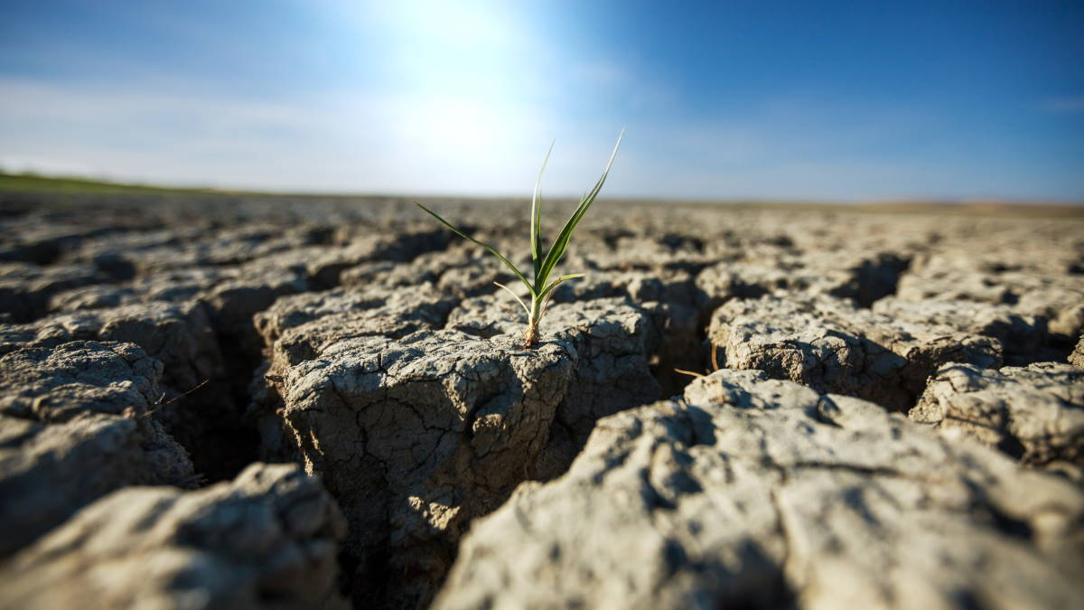 Засуха потрескавшаяся земля
