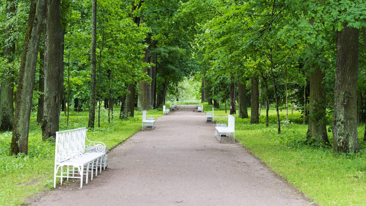Парк скамейки