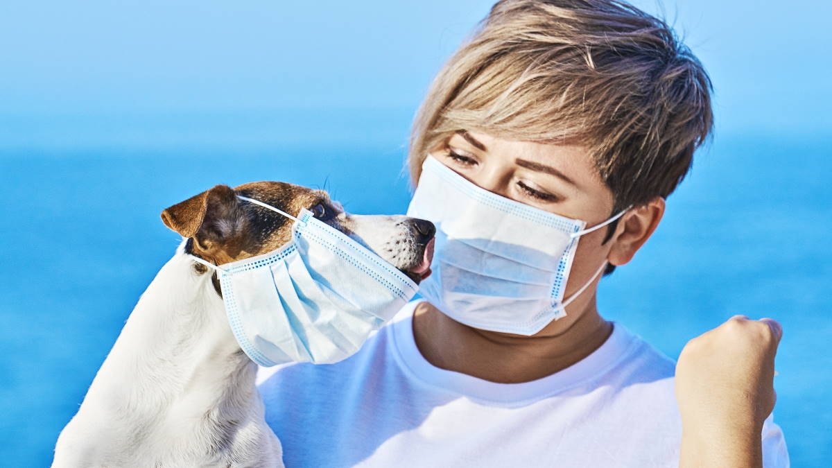 собака в маске с хозяйкой