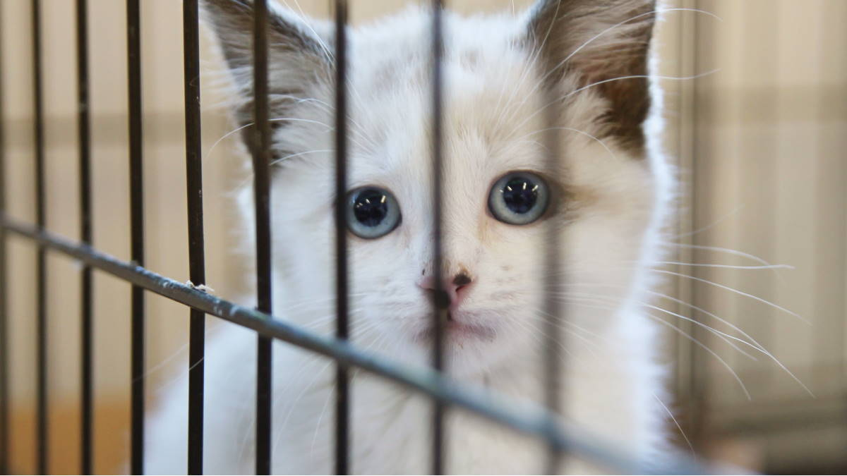 Кошка кошачий приют