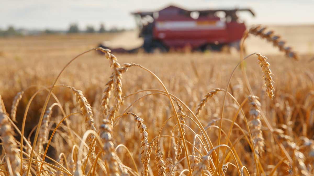 Зерноуборочный комбайн