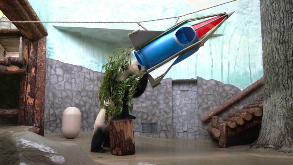 Для панды в Московском зоопарке построили ракету ко Дню космонавтики: видео