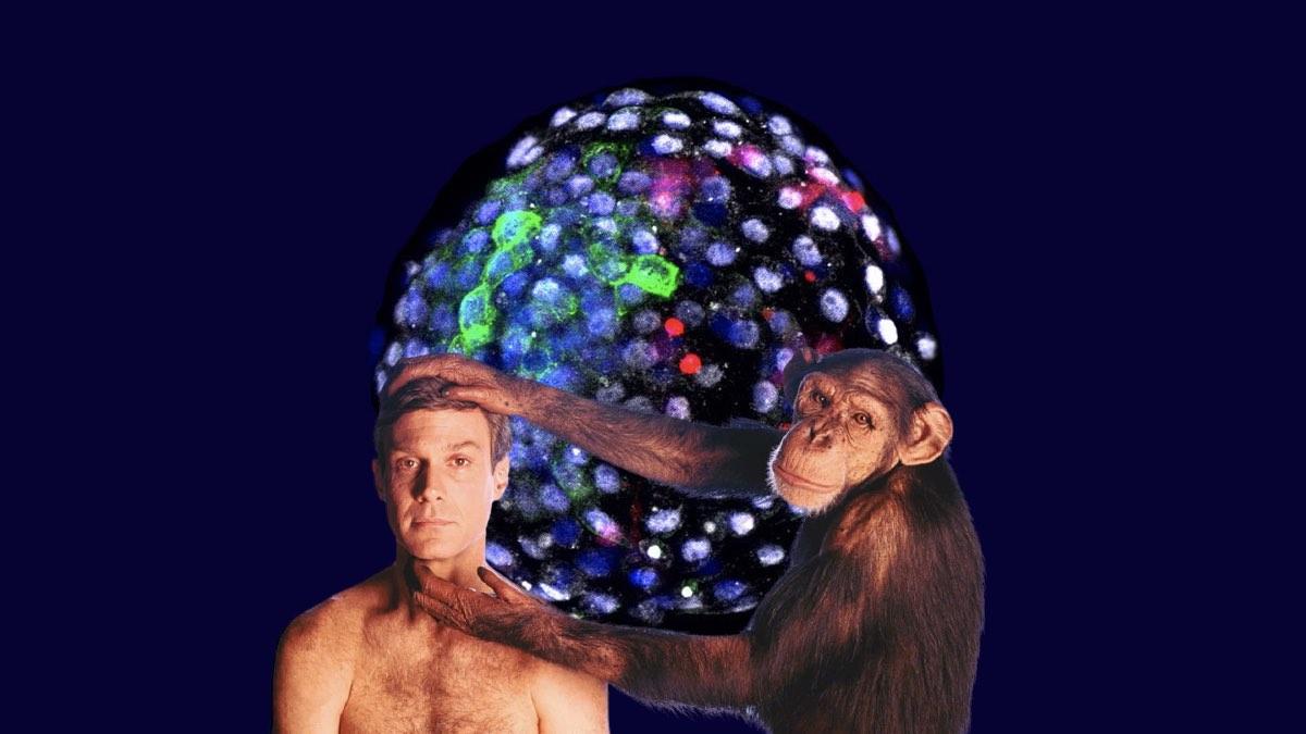 химерный эмбрион обезьяны и человека