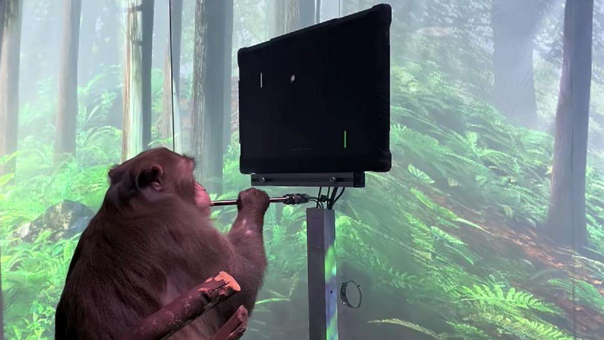 Neuralink обезьяна играет в пинг-понг