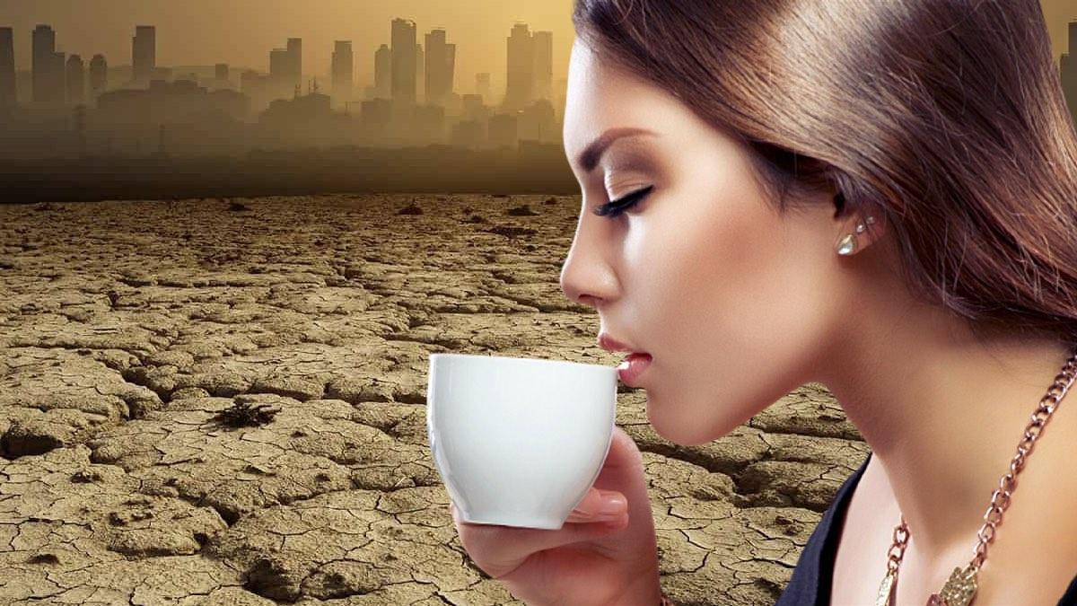 изменение климата и вкус кофе