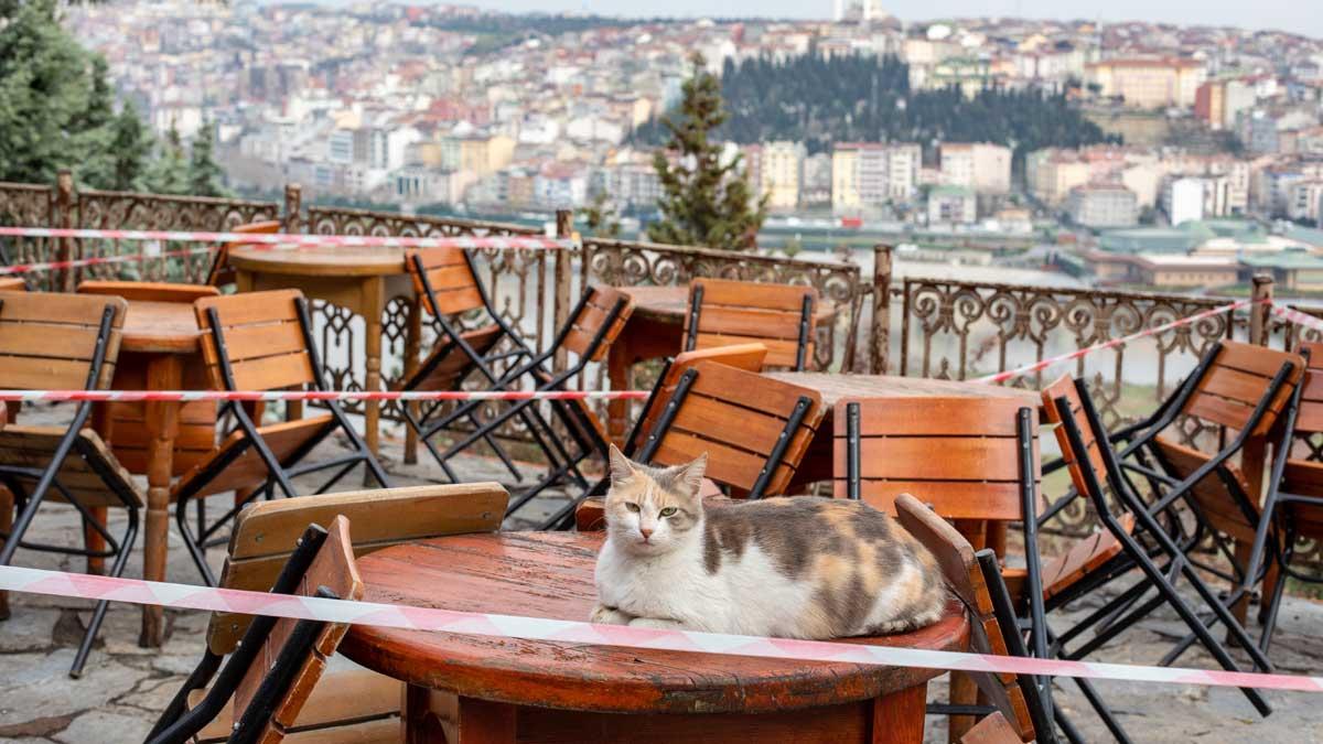кошка сидит на столе закрыто