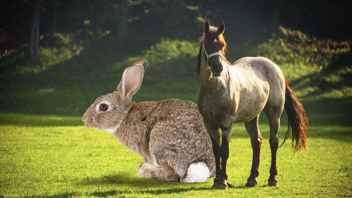 кролик и лошадь