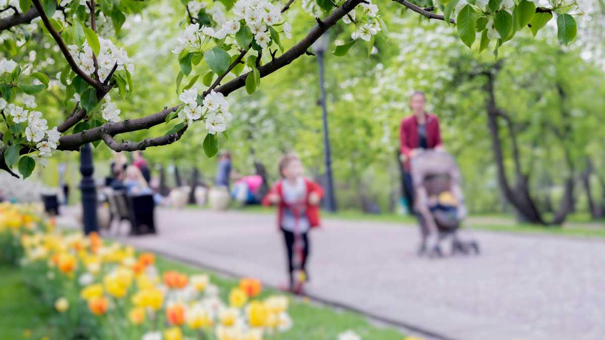 парк люди гуляют ветка цветы