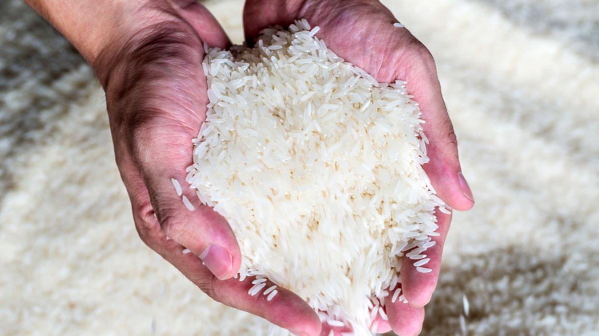 рис в руках производство