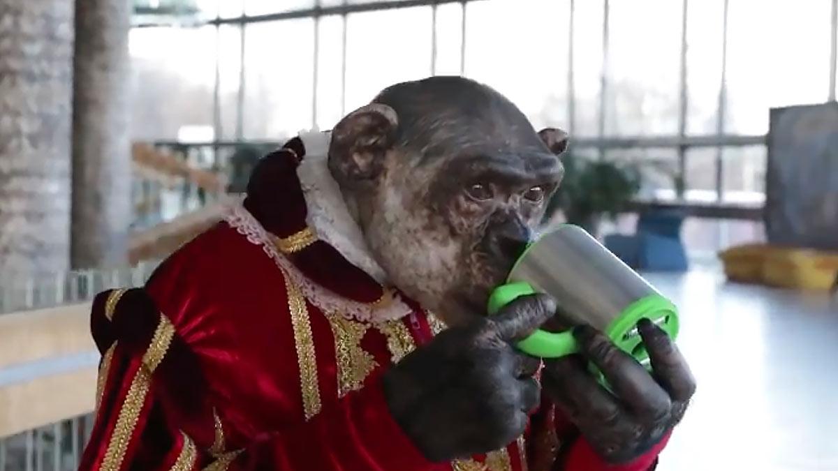 шимпанзе микки большой московский цирк