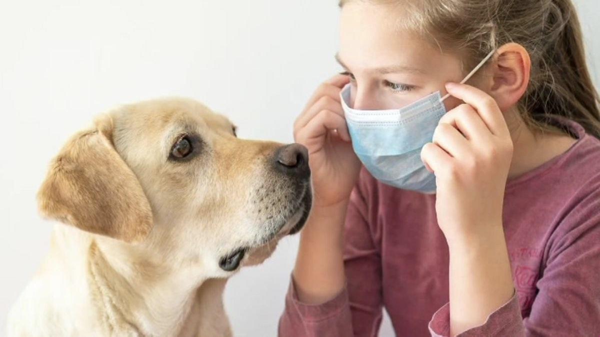 собака и коронавирус