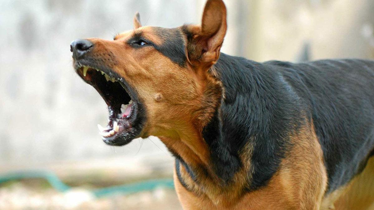 злая агрессивная собака