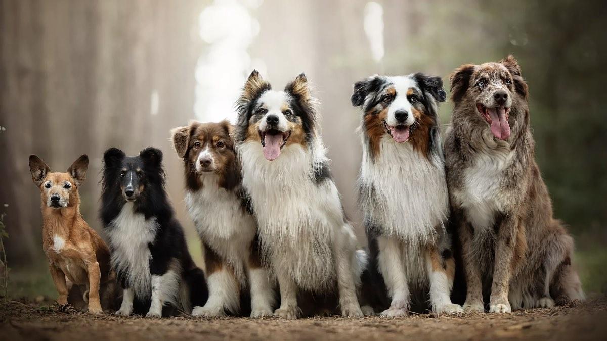 собаки разные