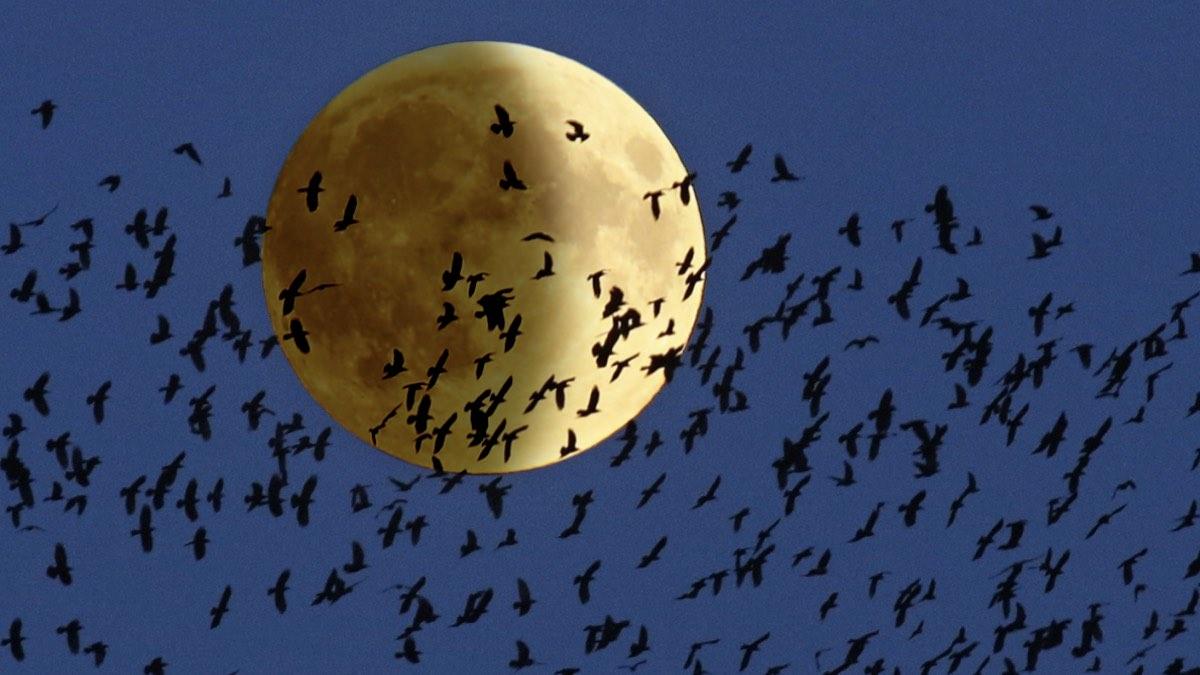 суперлуние и затмение Луны