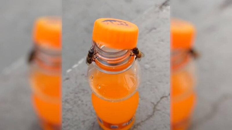 две пчелы открыли бутылку