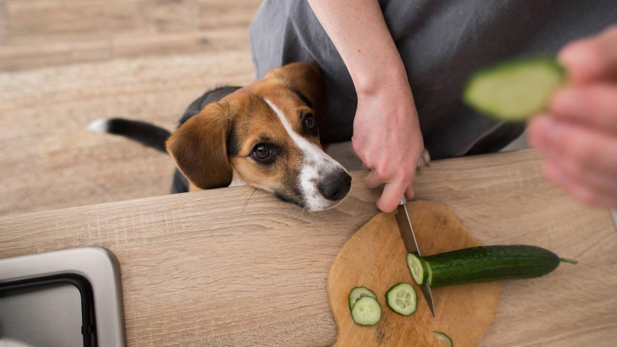 Собака просит еду со стола