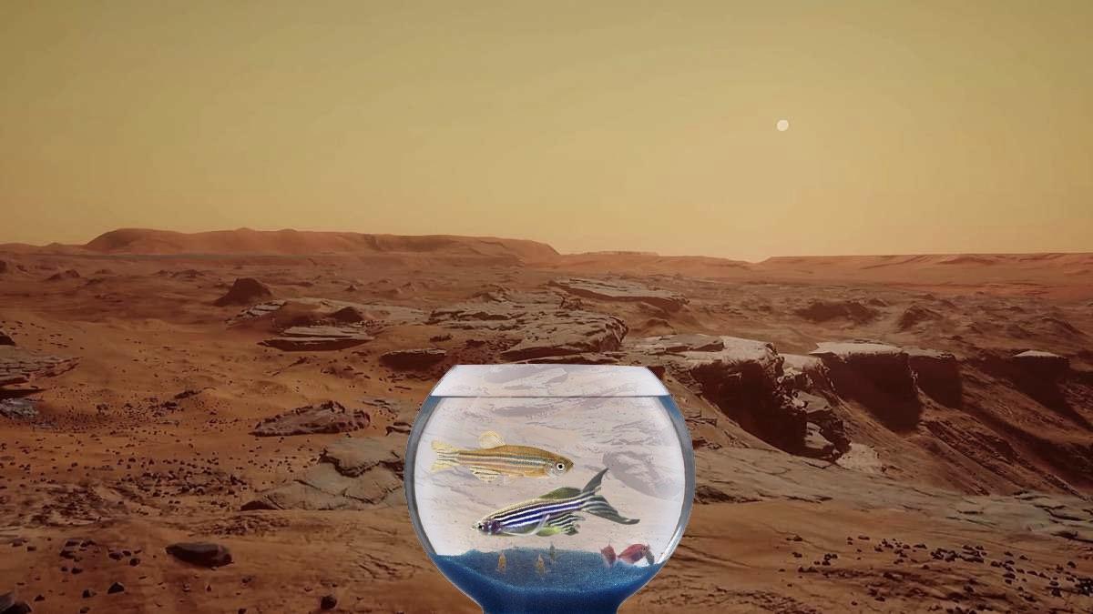 Марс и рыбки Данио рерио