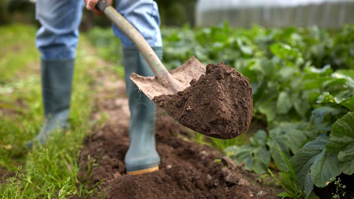 мужчина копает огород