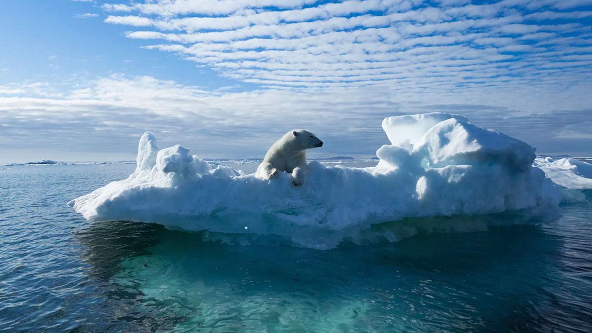 белый медведь плывет на льдине