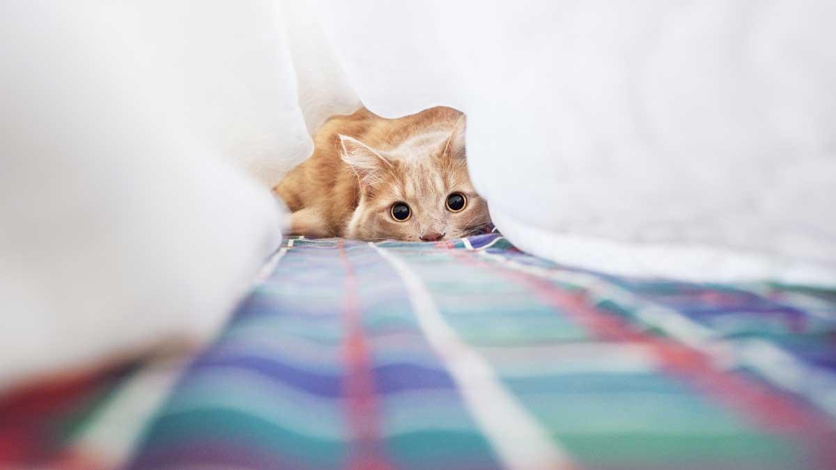 кошка играет в кровати под одеялом
