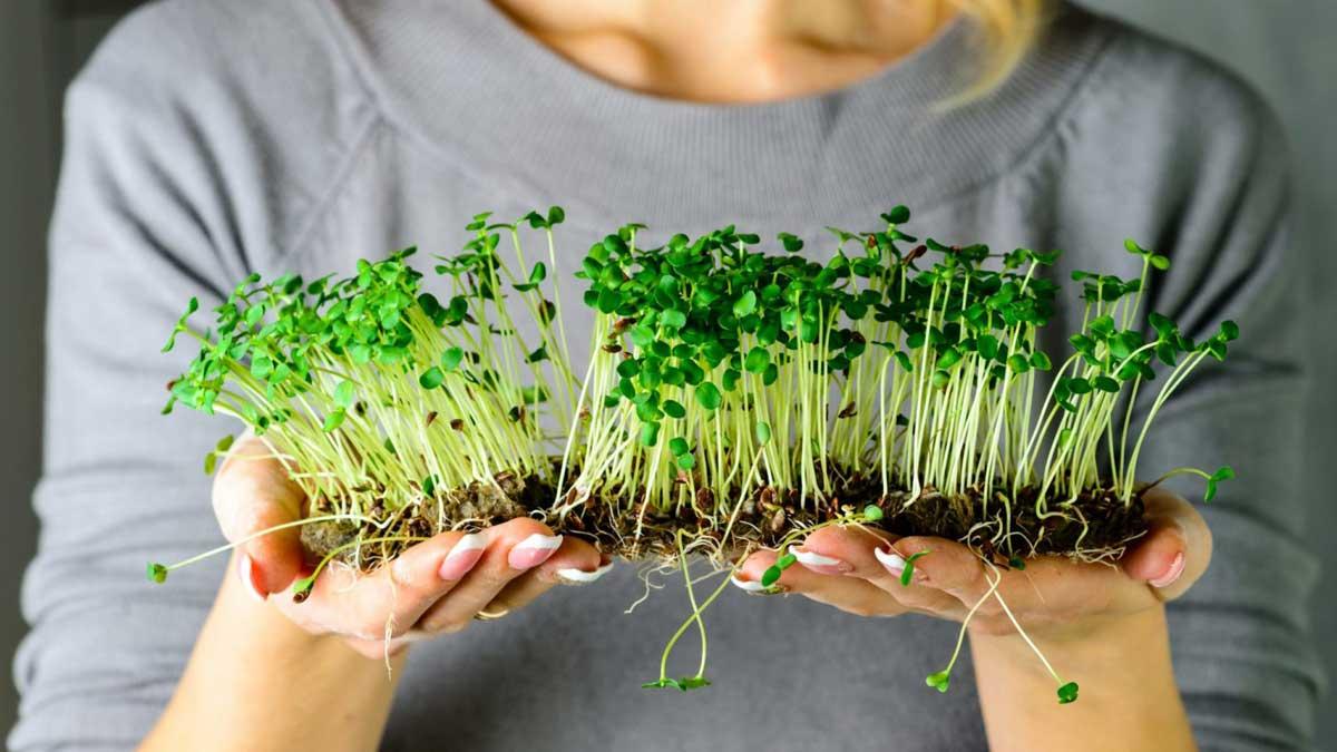 девушка держит микрозелень кресс-салат