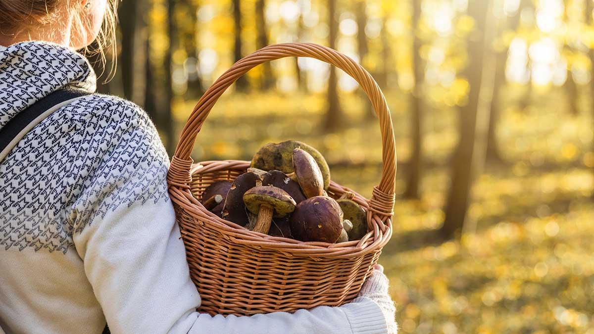 девушка лес корзина с грибами