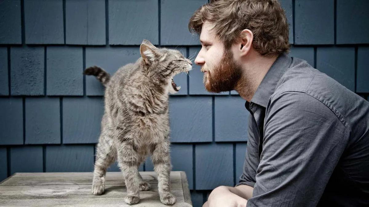 кошка шипит на мужчину