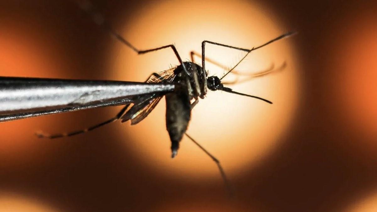 комар макросъемка