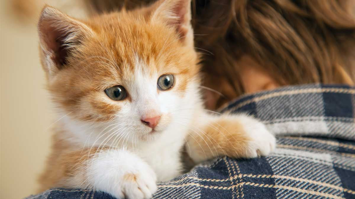 маленький котенок сидит не плече