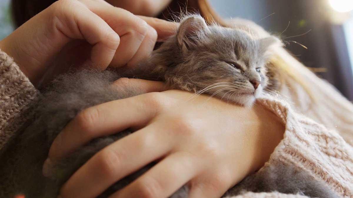 милый спящий котенок в руках женщины