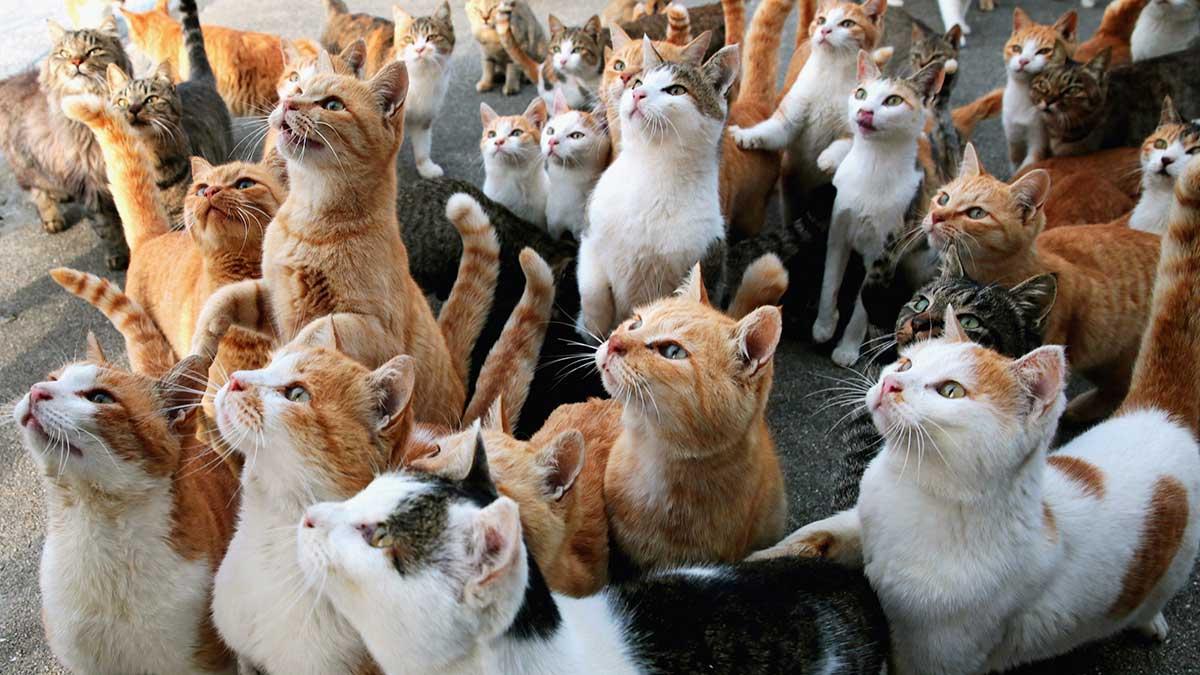 много разных кошек котов
