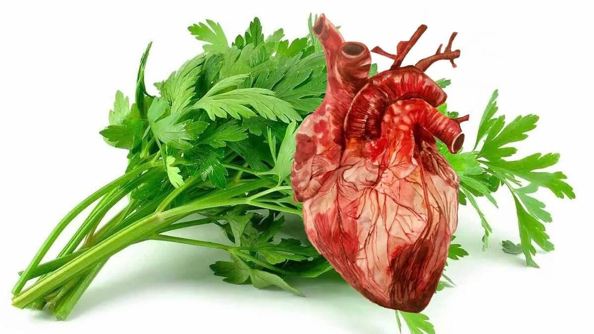 петрушка и сердце