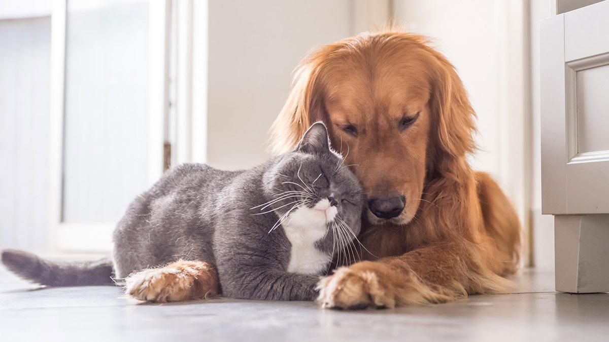 собака и кошка дружат