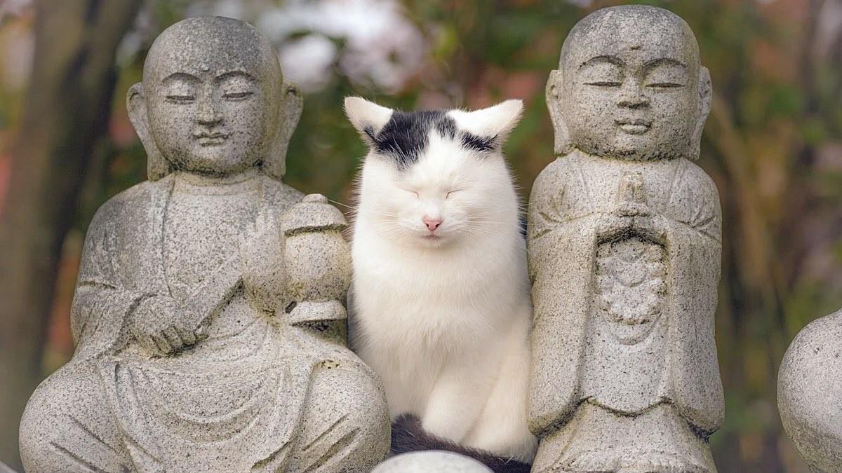 Самые спокойные кошки