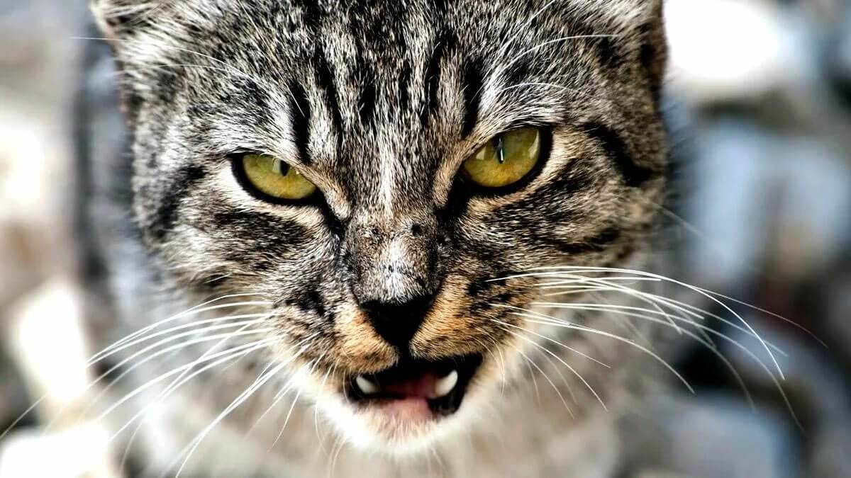 страшные кошки