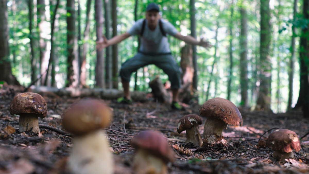 грибник собирать искать грибы