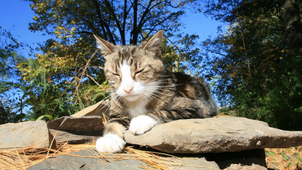 кошка на камнях