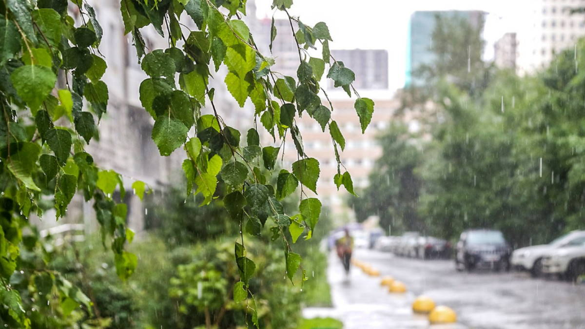 Погода дождь ливень гроза