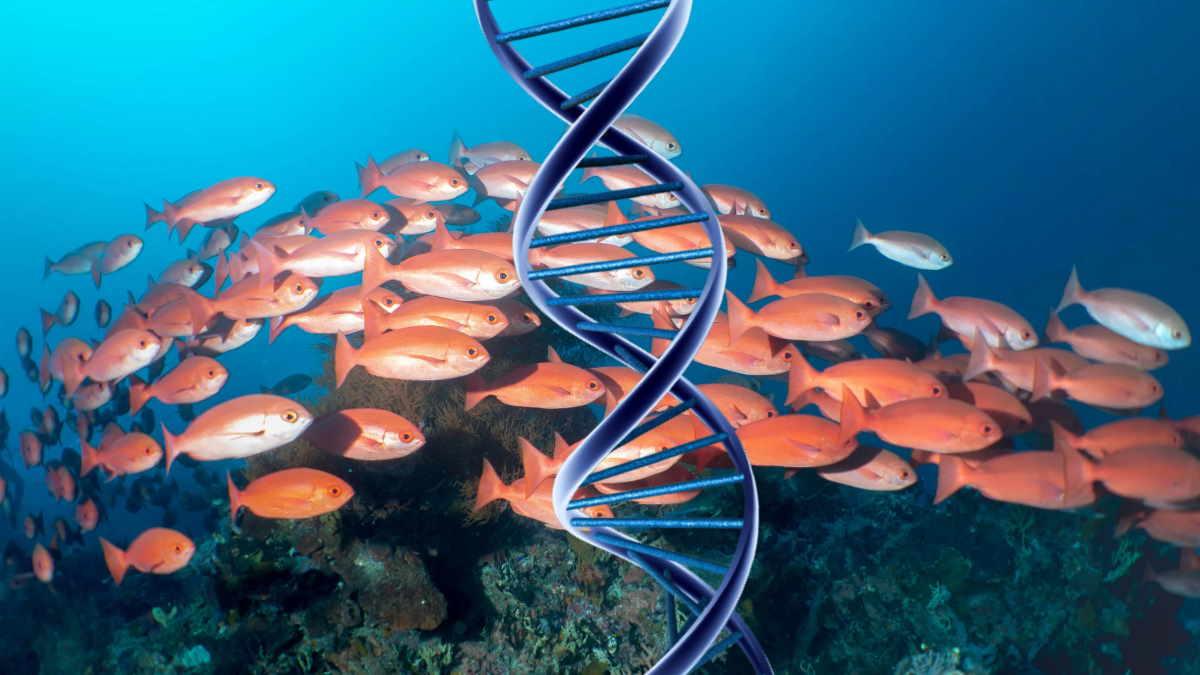 рыба в море и спираль ДНК