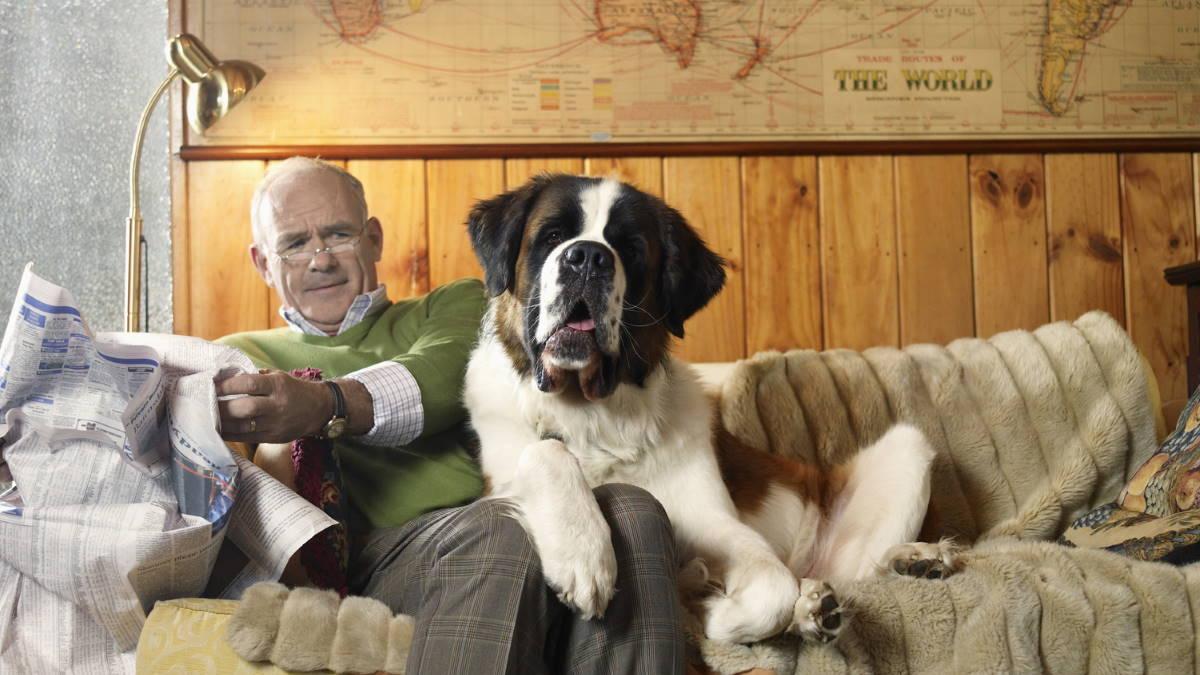 Мужчина и собака породы Сенбернар